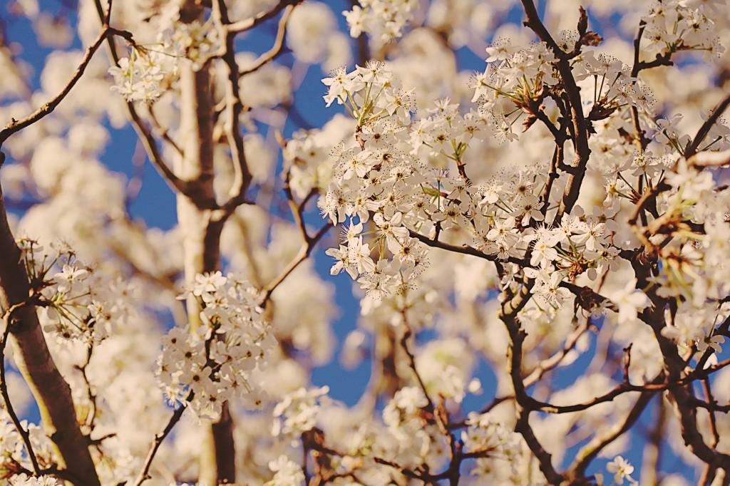 polleny spring